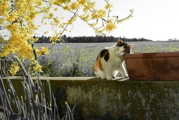 柔らかな春の日を浴びて、お昼寝する子猫