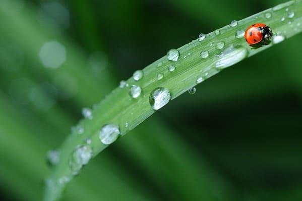 雨上がり 緑色の葉っぱとてんとう虫